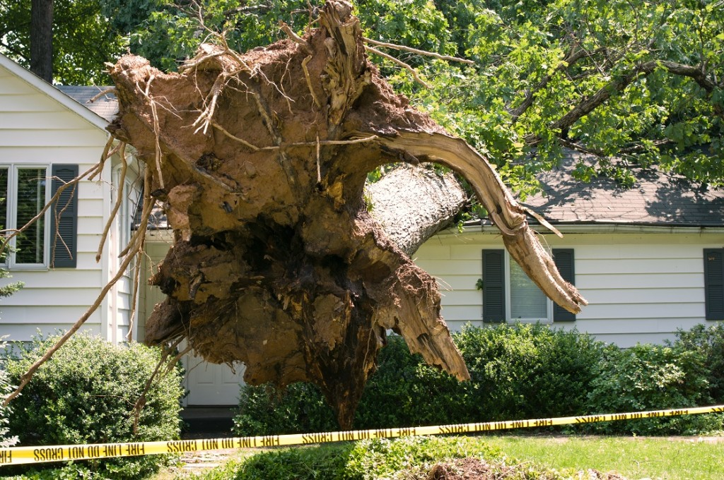 storm caused tree to fall on roof causing water and structural damage